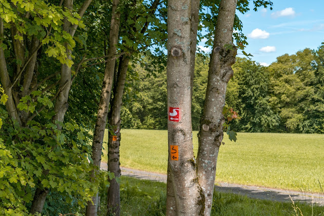 Talsperrenweg Siegburg | Wahnbachtalsperre | Erlebnisweg Sieg | Naturregion Sieg 11