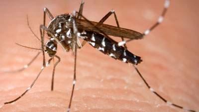 Nyamuk menghisap darah untuk mendapatkan protein