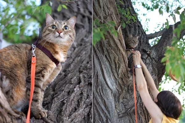 как спасти кошку от собаки