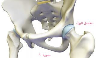 الهيكل العظمي - الهيكل العظمي و بنيته التفصيلية