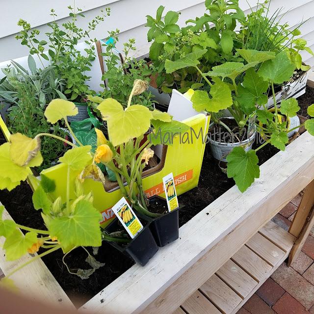 herbs and vegetables custom made garden box