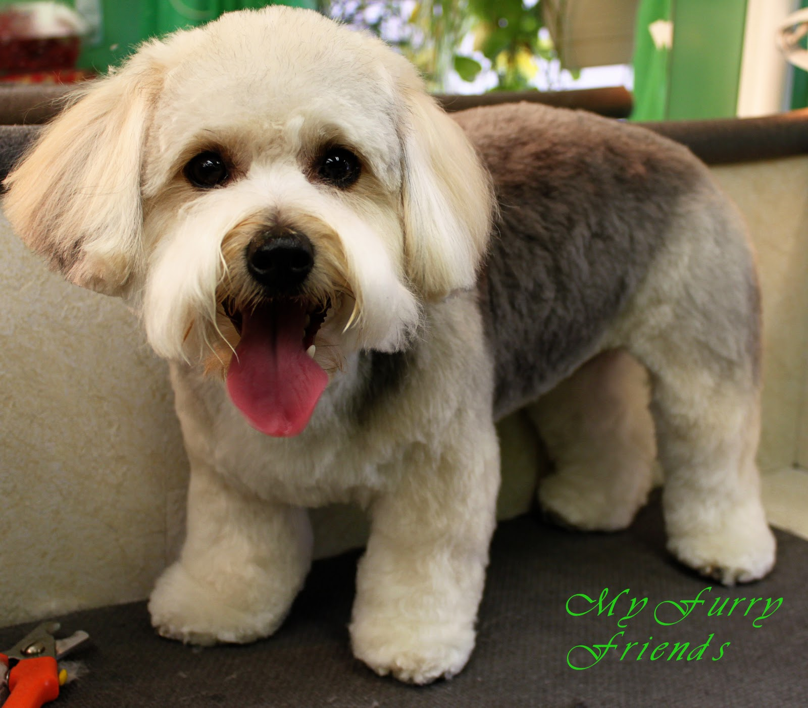 Schnoodle Hair Cuts Blackhairstylecuts Com