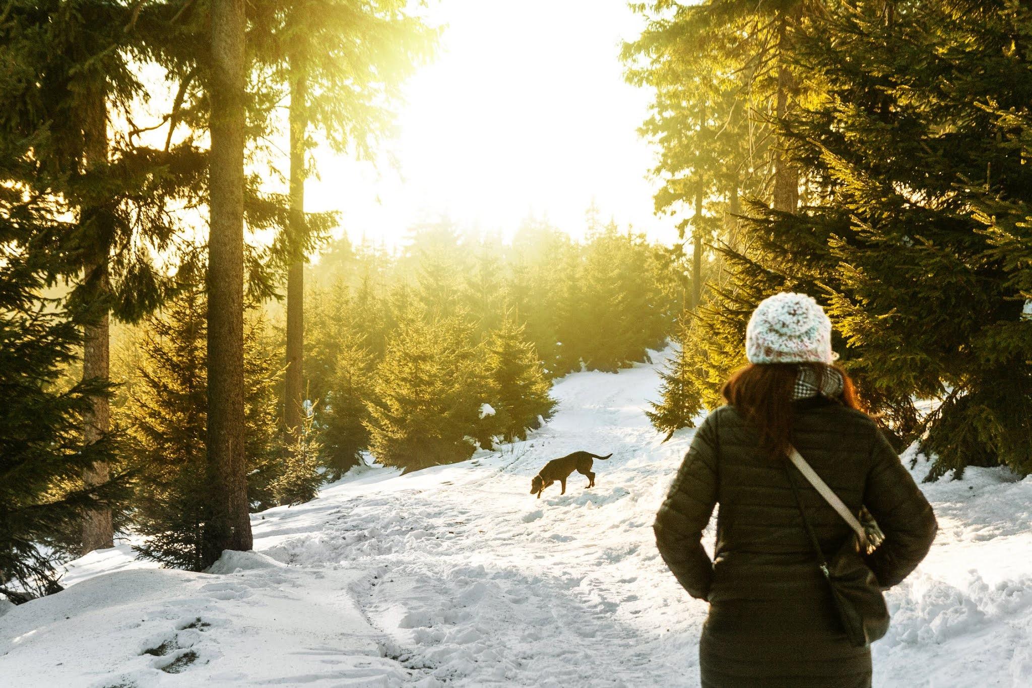 5 Ways to Enjoy Snow With Your dog