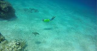 Freedive Cozumel