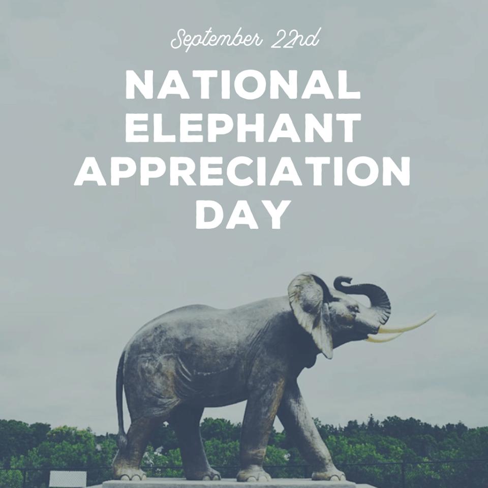 National Elephant Appreciation Day Wishes
