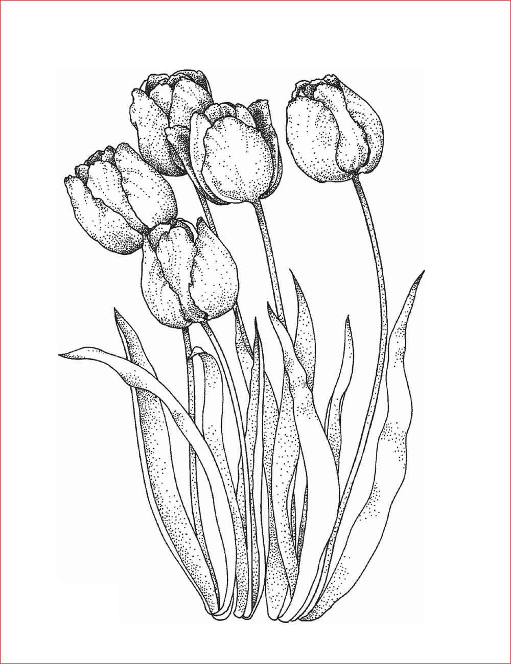 30 Gambar Sketsa Bunga Mudah Bunga Matahari Mawar Tulip