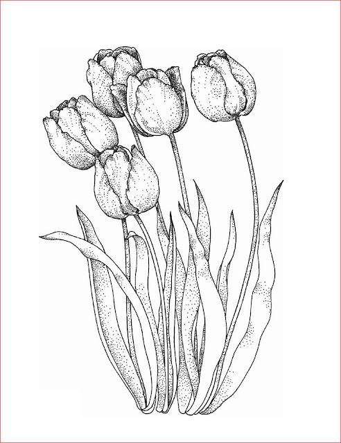 gambar-sketsa-bunga-tulip
