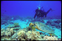 1000 Seychelles Diving Read