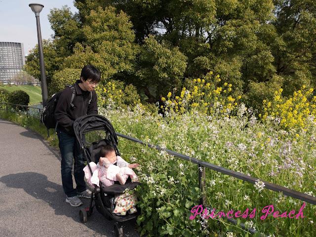 皇居外圍之野花也很美