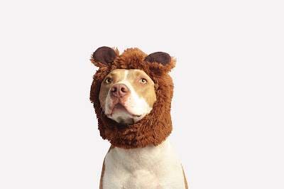 Really funny pictures of dogs download free  New Photos /images 2020