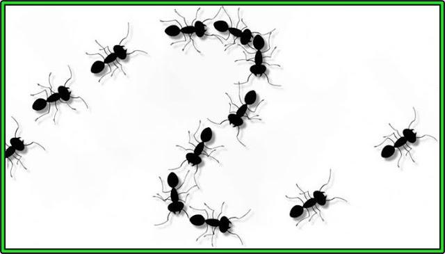 चीटियाँ हमेशा लाइन में ही क्यों चलता हैं ? जाने रहस्य