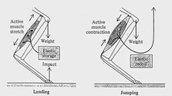 Biomechanics Blog: The Volleyball Spike