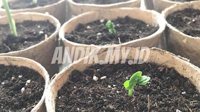 berkebun, berkebun organik, organik, sayuran organik, kebun organik