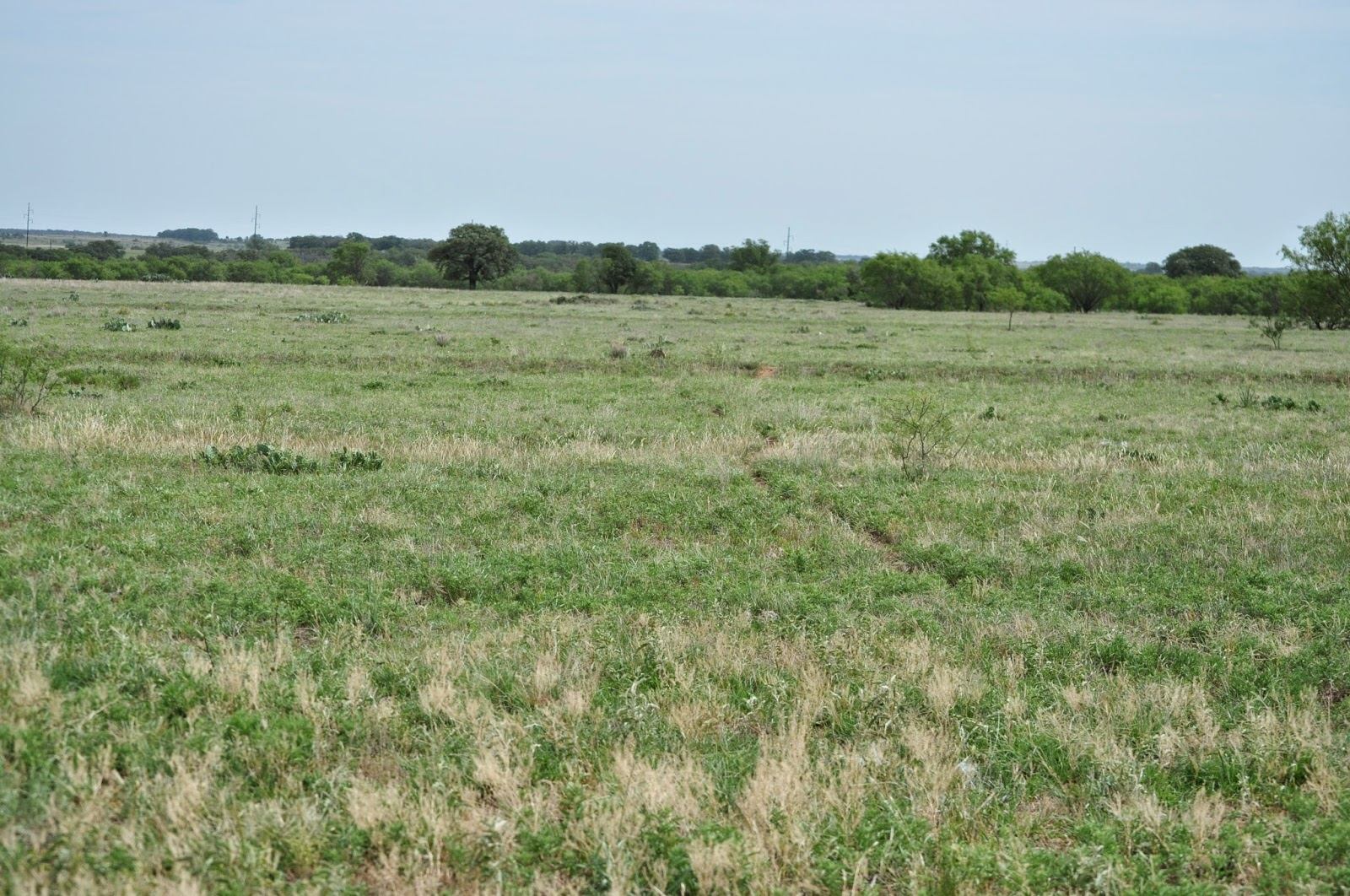 Texas, Ranch, Photography, Green Pastures