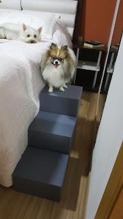 escadas para cães petfriendly