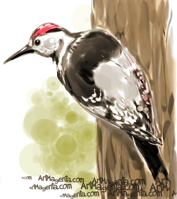 White-backed Woodpecker sketch painting. Bird art drawing by illustrator Artmagenta