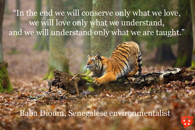 An interview with Dr. Mark Goldstein about his book, Lions and Tigers and Hamsters. Quote from Baba Dioum