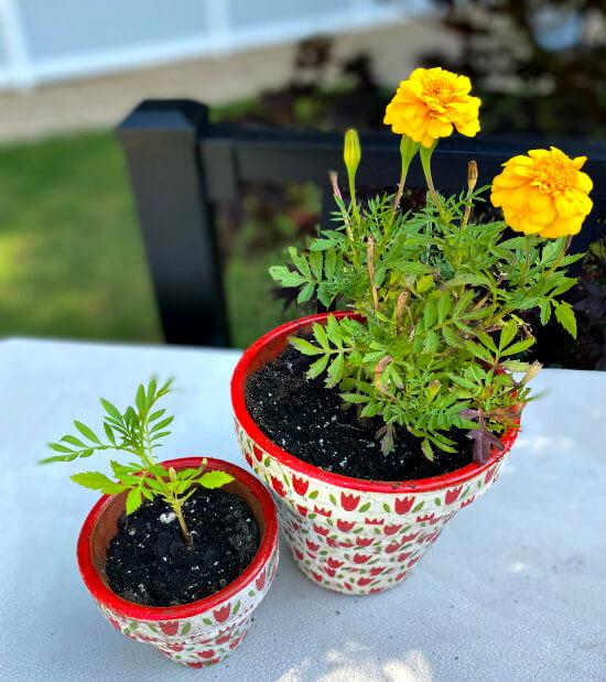 Decoupaged terra cotta pots using napkins.