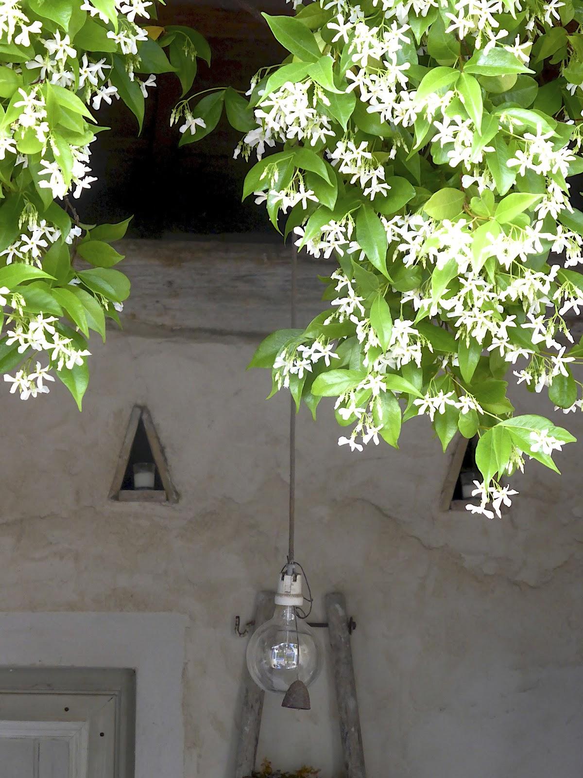 Manon 21 le petit jardin du mas bleu for Le petit jardin