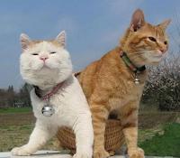 http://www.kucingmanja.com/2018/01/inilah-cara-melebatkan-bulu-kucing.html