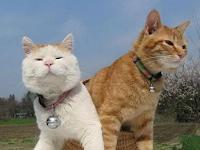 Inilah Cara Melebatkan Bulu Kucing Kampung Dengan Benar dan Aman