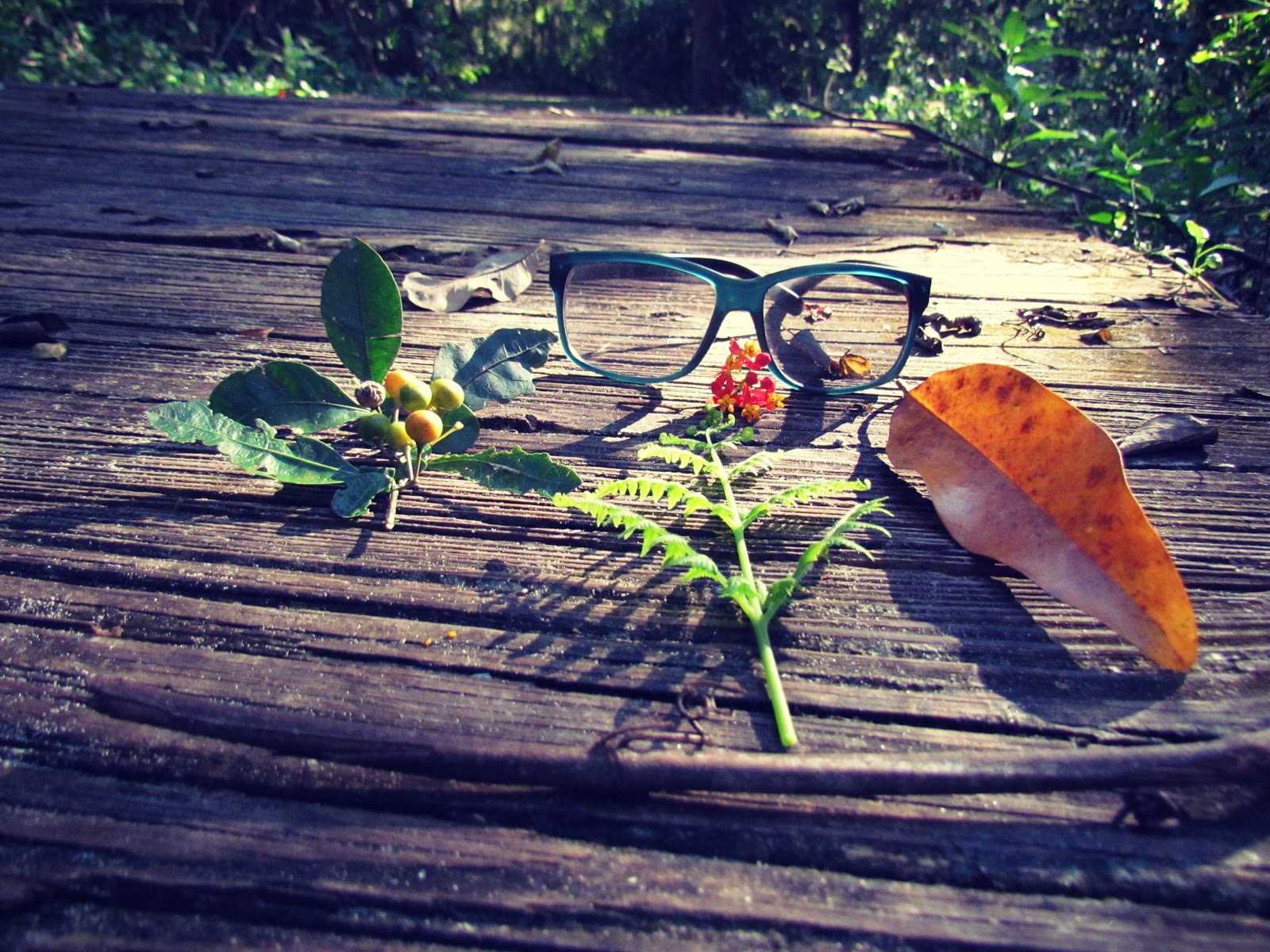 A hiking flat lay with a fern leaf, black sunglasses, golden berries, and sticks, and twigs