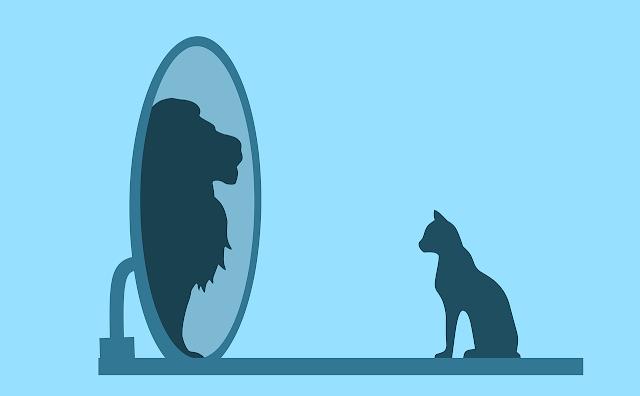 Animal vê seu reflexo um tanto exagerado
