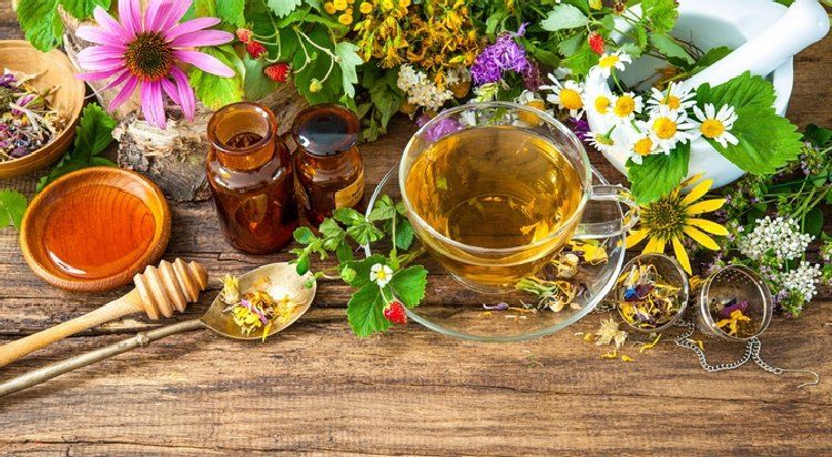 Ervas medicinais: saiba como elas podem te ajudar no dia a dia