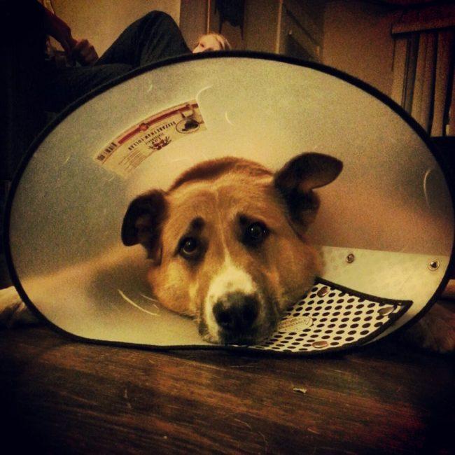 9 cães que vão fazer você esquecer que teve um mau dia