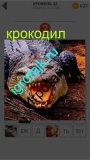 большой крокодил открыл пасть огромную ответ на 22 уровень 400 плюс слов 2