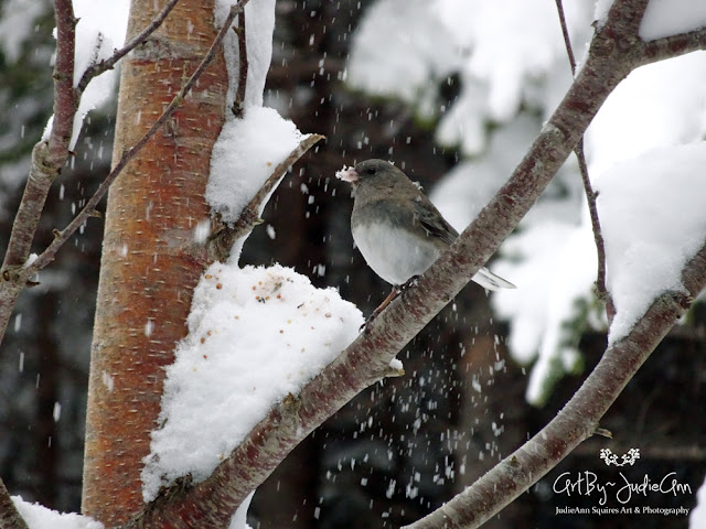 Junco Photos