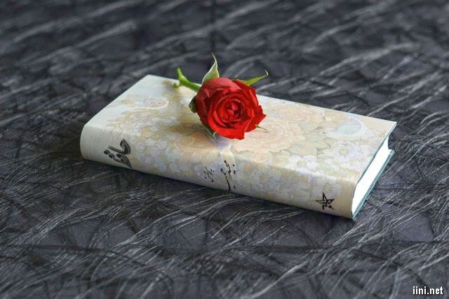 ảnh đẹp hoa hồng và sách