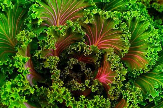 Medical advantages of Kale - RictasBlog