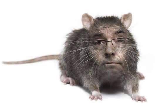 Palavra livre davis sena filho sem voto direita for A tua piscina ta cheia de ratos