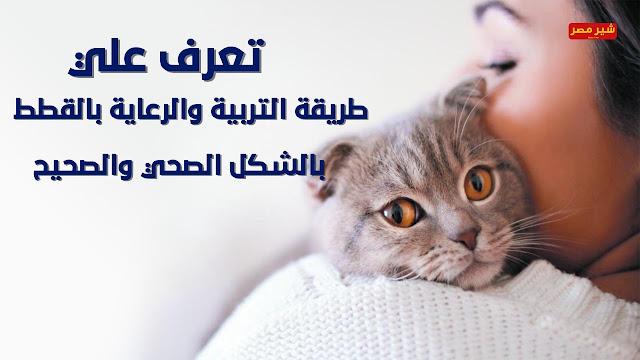 طريقة التربية والرعاية بالقطط