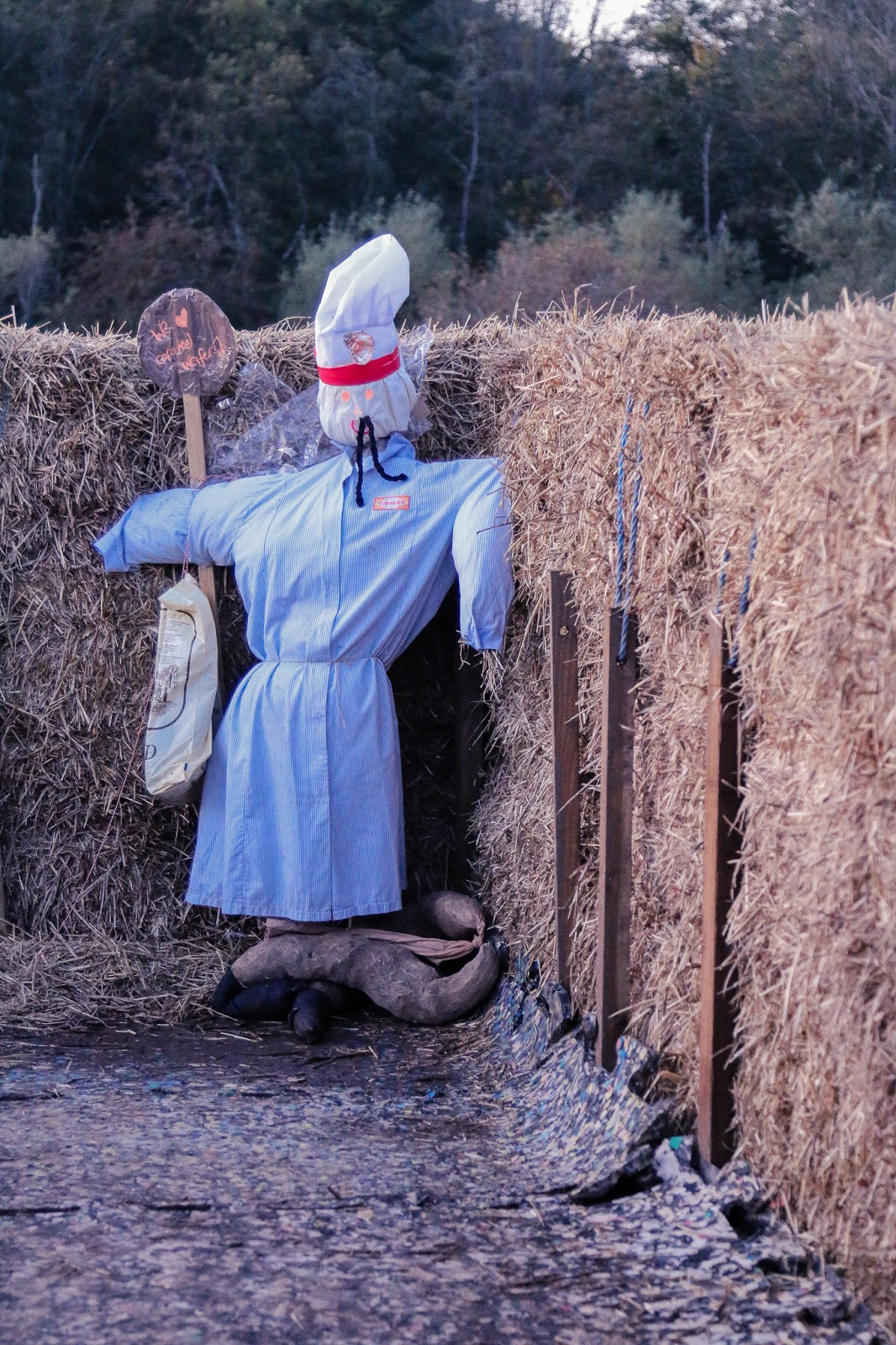 Close up photo of a scarecrow with a nurse costume on in the hay maze at M&Ds pumpkin patch