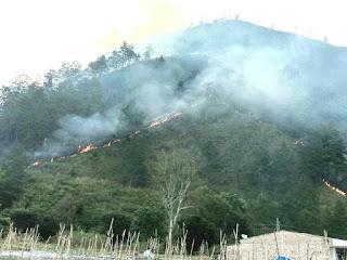 Bukit Desa Tongging Terbakar, Puluhah Hektare Hangus