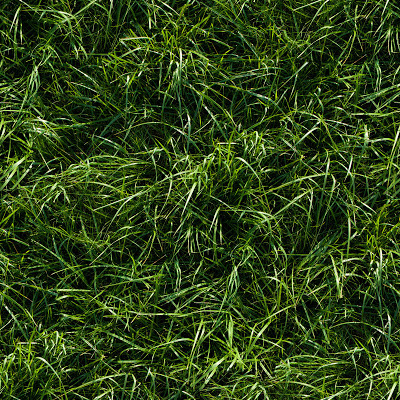 Seamless long green grass ground texture
