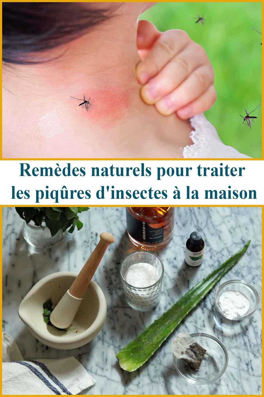 Remèdes naturels pour traiter les piqûres d'insectes à la maison