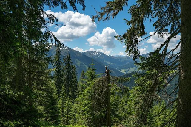 Waldwandern in Saalbach | Wanderung zu den Waldteichen am Maisereck | Saalbach - Maisalm - Wirtsalm - Waldteiche - Spielberghaus - Saalbach | Wandern-SalzburgerLand 10