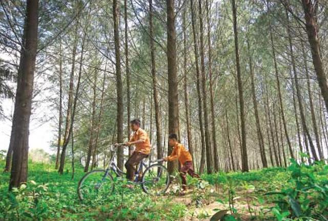 Asyiknya bermain sepeda di bawah rindangnya hutan pinus Pantai Kata, Kota Pariaman