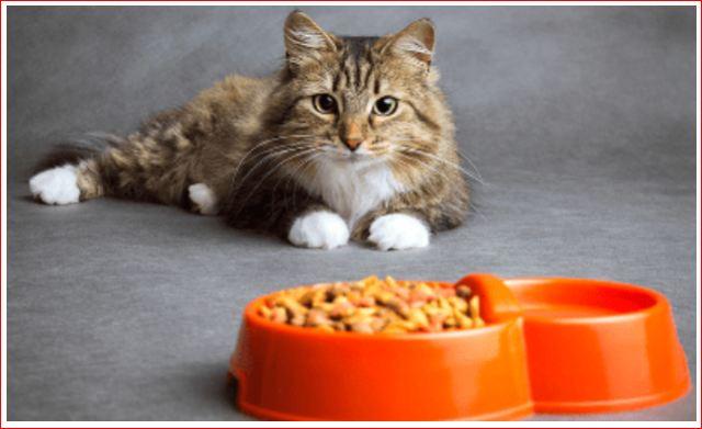 cara memberi makan kucing pakai whiskas