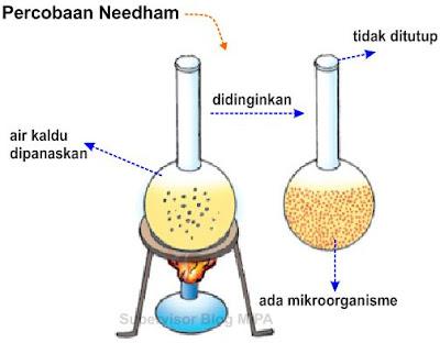 percobaan atau eksperimen teori abiogenesis needham