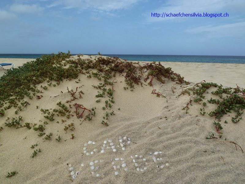 Schäfchen Silvia: Sal - Kap Verde