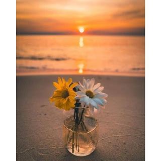 Beautiful Flower Whatsapp DP