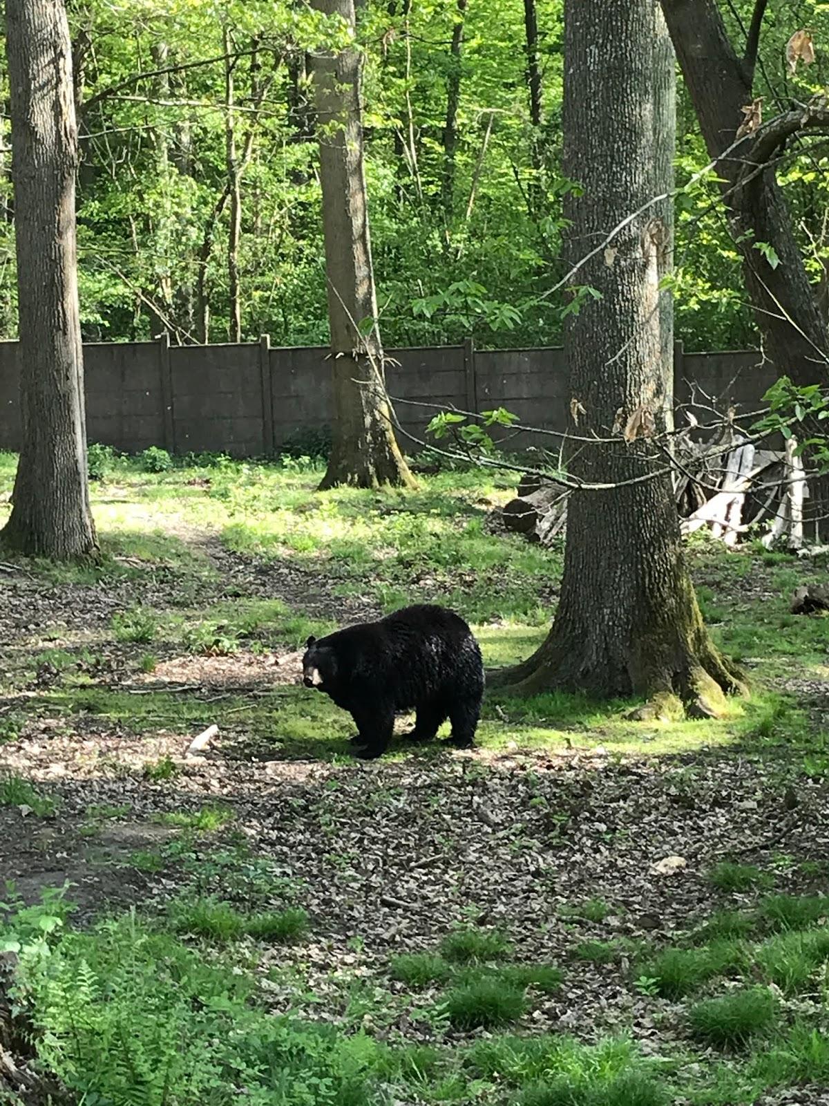 Zoo Safari de Thoiry