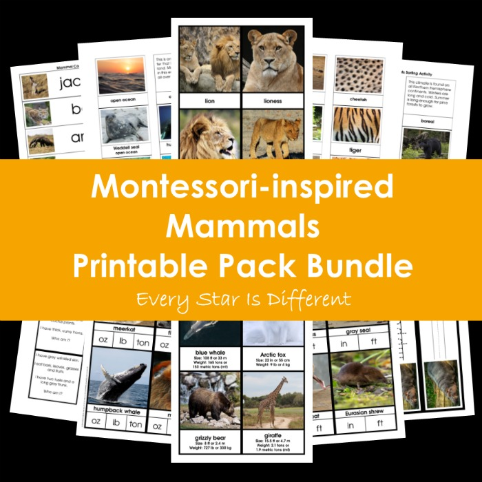 Montessori-inspired Mammals Printable Pack