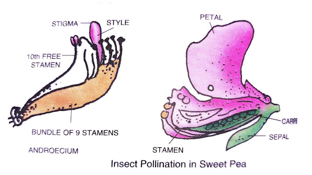 advantages and disadvantages of pollination