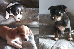 NEVER FREAKIN ENDS: Tiny puppies dumped at the kill shelter