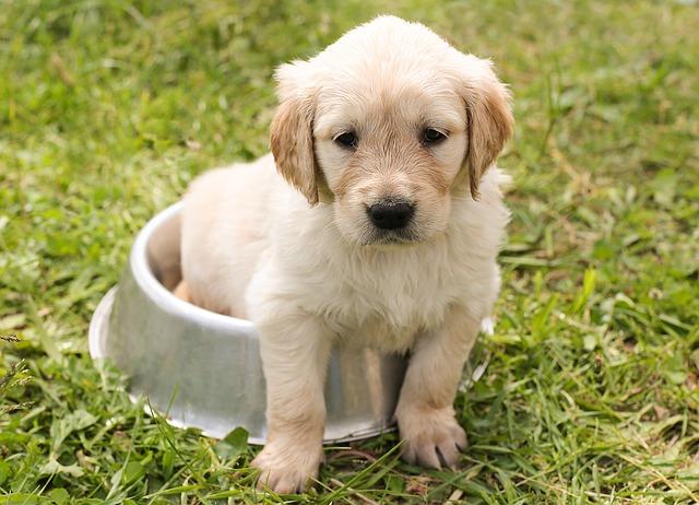 Sensitive stomach puppy food